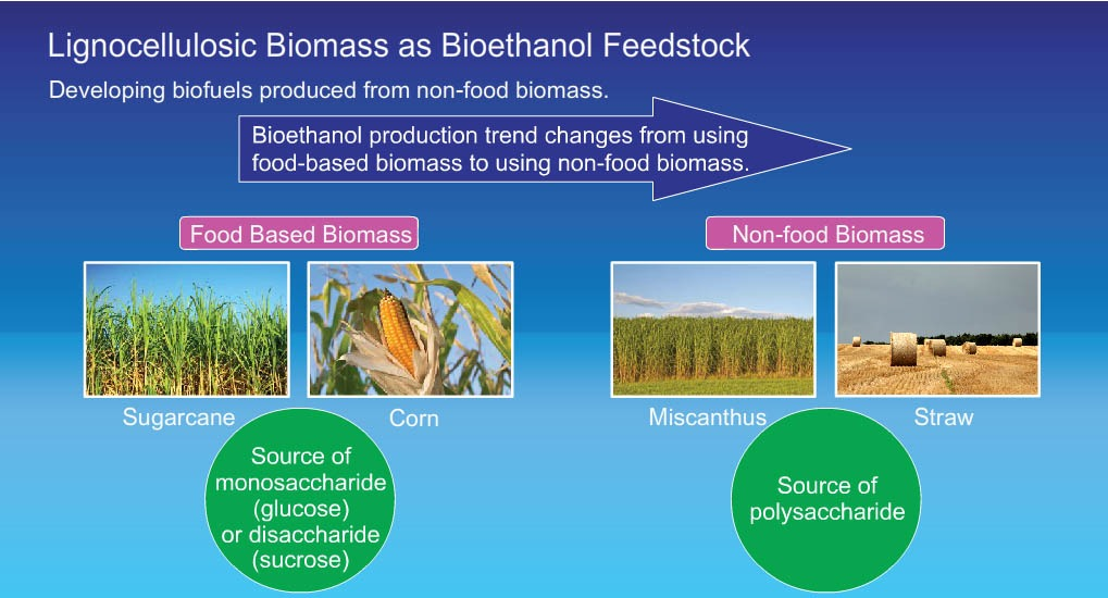 Biofuel resources: first and second generation biomass for transportation fuel